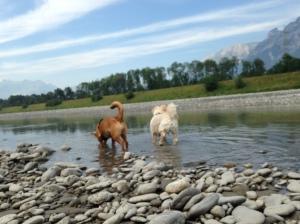 Mit Rocco und Maita am Rhein.
